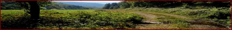 Demobild für einen Waldweg 1